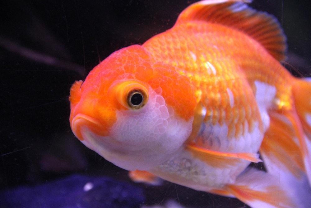 injured fish