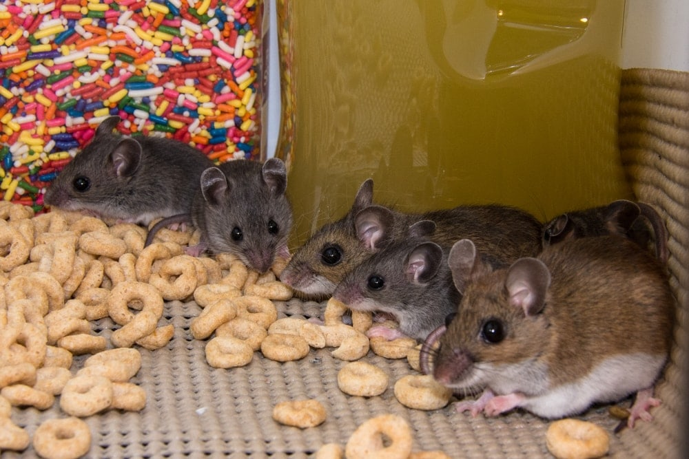 mice and crunch