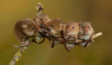 mice climb