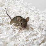 How Much Does Pet Mice Cost to Own?