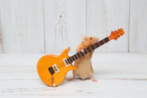 pet mouse playing guitar