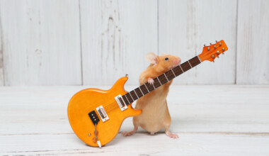 pet mouse playing guitar