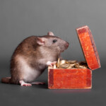 How Much Does a Pet Rat Cost to Own?