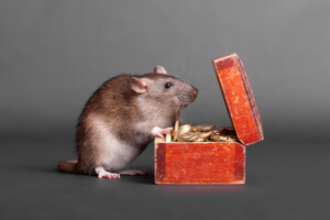 pet rat cost to own