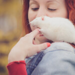 5 Tricks You Can Teach Your Pet Rat