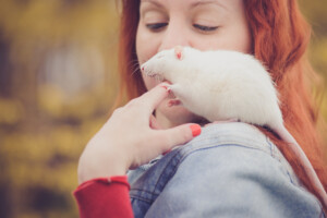 pet rat shoulder