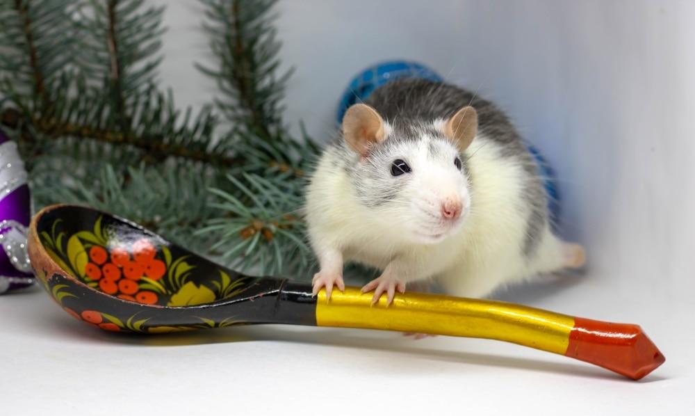 pet rat sleeve