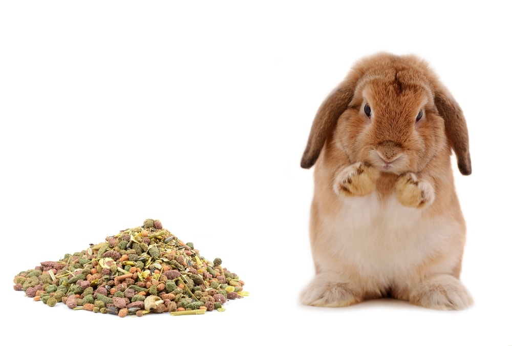 rabbit and food