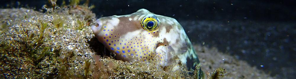 sleep fish in a sea e1591438843836