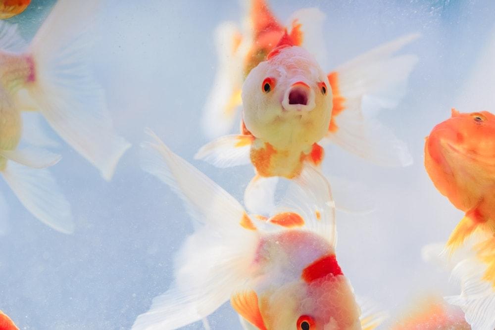 sneezing fish